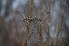 Trockene Fallblume, Ende November lizenzfreie stockfotos