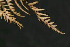 Trockene Farnblätter auf einem dunklen Hintergrund Lizenzfreie Stockbilder