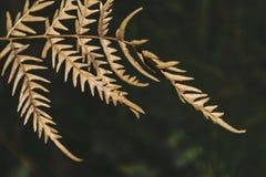 Trockene Farnblätter auf einem dunklen Hintergrund Stockbild