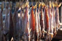 Trockene Fische Stockbild