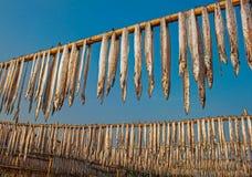 Trockene Fische Lizenzfreie Stockfotografie