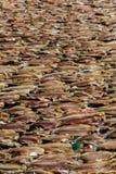 Trockene Fische auf dem Netz Stockfotografie