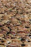 Trockene Fische auf dem Netz Stockfoto