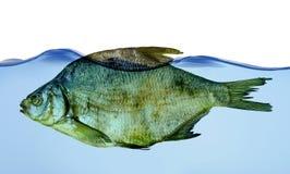 Trockene Fische im Wasser Stockfotos