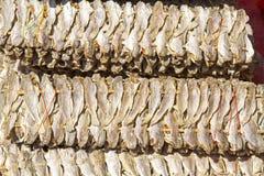 Trockene Fische Smalll Lizenzfreies Stockbild
