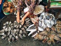 Trockene Fische Sun Stockbilder