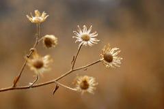 Trockene Flora Stockbild