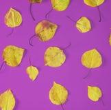 Trockene gelbe Blätter des Aprikosenbaums stockbilder