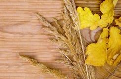 Trockene gelbe Eiche verlässt und Anlage des trockenen Grases liegen auf einem hölzernen Hintergrund lizenzfreies stockfoto