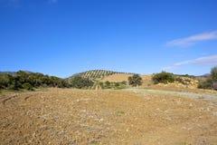 Trockene gepflogene Felder von Andalusien Lizenzfreie Stockbilder