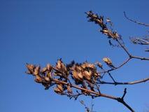 Trockene Gräser gegen einen sonnenbeschienen blauen Himmel stockbild