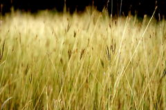 Trockene Gräser im Wasser Lizenzfreies Stockbild