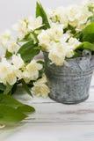 Trockene grüne Teeblätter des Jasmins mit Jasmin blüht auf weißem Hintergrund Stockfoto