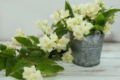 Trockene grüne Teeblätter des Jasmins mit Jasminblumen Stockfoto