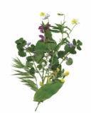 Trockene Herbariumanlagen Blumen- und Blattvektorillustration Stockbilder