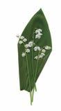 Trockene Herbariumanlagen Blumen- und Blattvektorillustration Stockbild