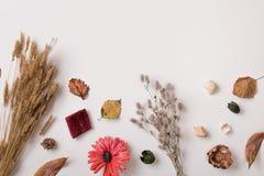 Trockene Herbstpflanzen mit Raum für Text Stockfotos