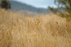 Trockene Herbstwiese Lizenzfreies Stockbild