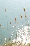 Trockene Kegel auf blauem Seehintergrund Stockbilder