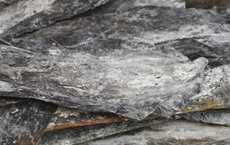 Trockene Kelpnahaufnahme des salzigen Blattes Stockfotografie