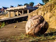 Trockene Kokosnuss Stockfotografie