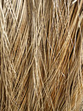 Trockene Kokosnussblätter Lizenzfreies Stockfoto