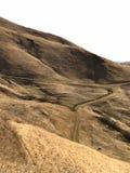 Trockene Landschaft Kaliforniens des Berges und des Schotterwegs, mit weißem Himmel und einzelne weiden lassende Kuh stockfotos