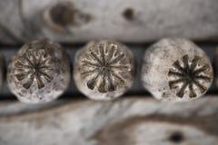 Trockene Mohnblumeköpfe Stockbild