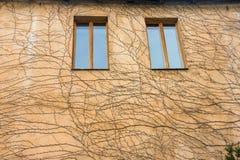 Trockene Musterdekoration der toten Zweige auf gelber Wand Rot und Orange f?rbt Efeublattnahaufnahme lizenzfreies stockfoto