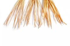 Trockene Niederlassung lokalisiertes Palmen-Grasunkraut des weißen Hintergrundes gelbes tropisches grasartig lizenzfreie stockbilder