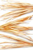 Trockene Niederlassung lokalisiertes Palmen-Grasunkraut des weißen Hintergrundes gelbes tropisches grasartig stockbild