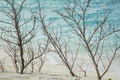 Trockene Niederlassungen auf der Küste stockfoto