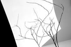 Trockene Niederlassungen auf einem weißen Hintergrund stockfotos