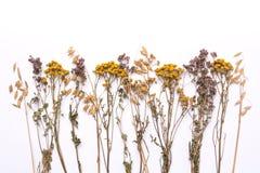 Trockene Niederlassungen der flachen Lage von Tansy und von Heide auf einem weißen Hintergrund Lizenzfreie Stockfotos