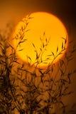 Trockene Niederlassungen gegen die Abendsonne Niederlassungen von Anlagen mit Blättern bei Sonnenuntergang Lizenzfreie Stockfotografie