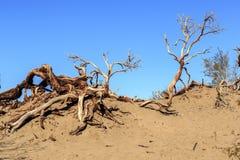 Trockene Niederlassungen im Sand Stockfoto