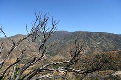 Trockene Niederlassungen und Ansicht des Berges in Nationalpark König-Canyon, CA, USA Stockfotos