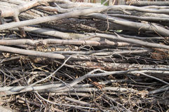 Trockene Niederlassungen und Baum Stamm-natürlich, organischer Hintergrund, Beschaffenheit Stockfotos