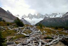 Trockene Niederlassungen und schneebedeckte Berge Lizenzfreie Stockbilder