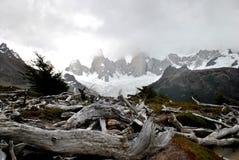 Trockene Niederlassungen und schneebedeckte Berge Lizenzfreies Stockfoto