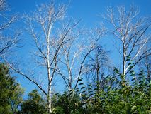 Trockene Niederlassungen von Bäumen stockbild