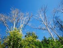 Trockene Niederlassungen von Bäumen lizenzfreie stockbilder
