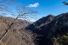 Trockene Niederlassungen von Bäumen und von Wald ohne Blatt im Winter bei Kegon Stockfotografie