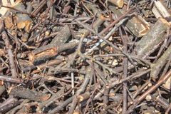 Trockene Niederlassungen von den Bäumen zerquetscht in Stückchen stockfoto