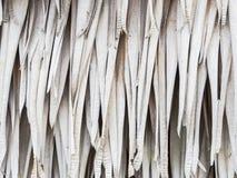 Trockene Palmblätter für Hintergrund Lizenzfreie Stockfotografie