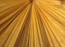 Trockene Palmblattbeschaffenheit Stockfotografie