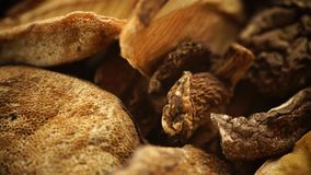 Trockene Pilze auf Holzoberfläche stock footage