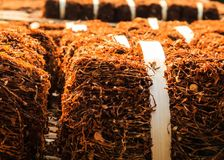 Trockene rauchende Tabakblätter Stockbilder