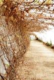 Trockene Rebe und Weg des Gewächshauses mit Topfpflanzen Stockfotografie