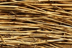Trockene REEDbeschaffenheit Organische Naturtapete des gelben Stocks lizenzfreies stockfoto